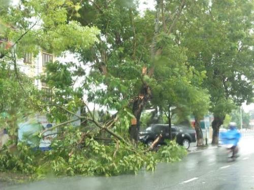Mưa lớn khiến cây cối ở các tuyến phố trung tâm TP. Huế đã bị gãy đỗ.