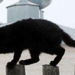 """Độc lạ: Dùng chuột để """"phát tán"""" ma túy trong trại giam"""