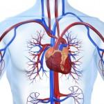 Chữa bệnh tim to
