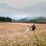 Cuối năm – thời điểm bung nở của các loại hoa